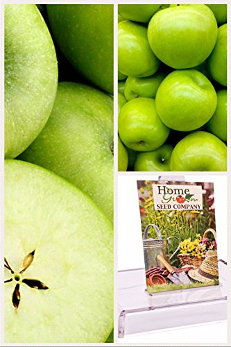 16Pcs Homegrown Apple Seeds Granny Smith Apple Tree - AsitiGift