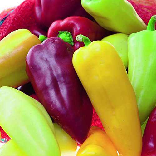 150 Pcs Sweet Bell Pepper Seeds - AsitiGift