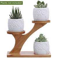 3pcs Owl Succulent Pots with 3 Tier Bamboo Saucers Stand Holder - AsitiGift