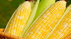 500Pcs Peaches & Cream Sweet Corn Non GMO Seeds - AsitiGift