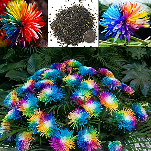 20Pcs Colorful Miniature Tree Flower Planting Seeds - AsitiGift