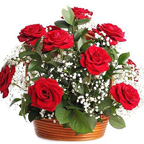 50 Red Rose Tree Seeds Balcony & Yard Flower Plant - AsitiGift