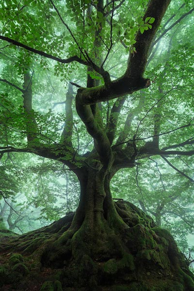The Magic Tree - Magische Orte - Michael Breitung