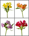 "Alstroemeria Mixed Box 224 ""SUPREMA"""
