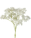 Gypsophila Million Star (Baby's Breath)