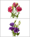Lisianthus Flare Mixed Box 770