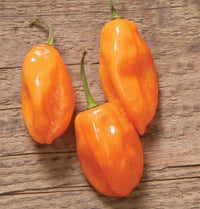 Habanero Pepper Seeds (Organic)