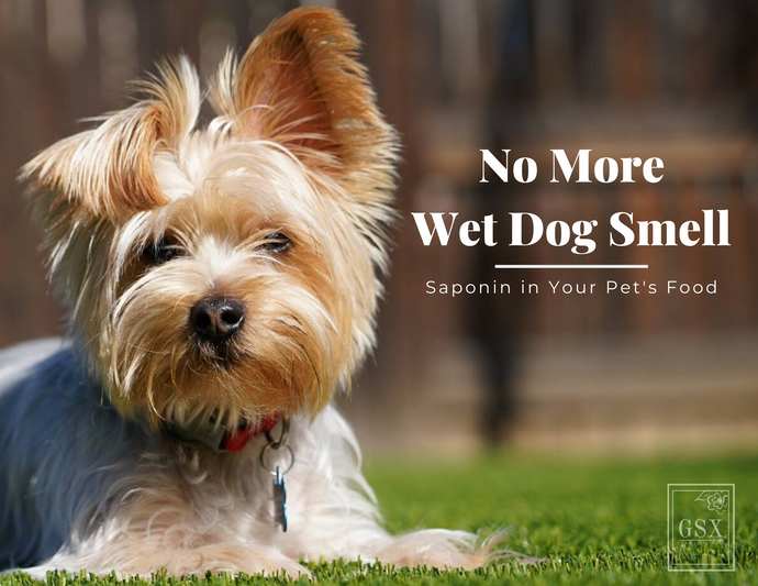 No More Wet Dog Smell: Saponin in Your Pet's Food