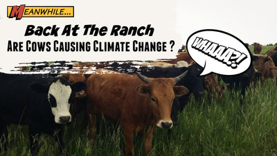 Are cattle causing climate change?