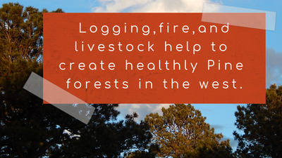 How we can use logging, fire, and grazing to create healthy forests in Colorado