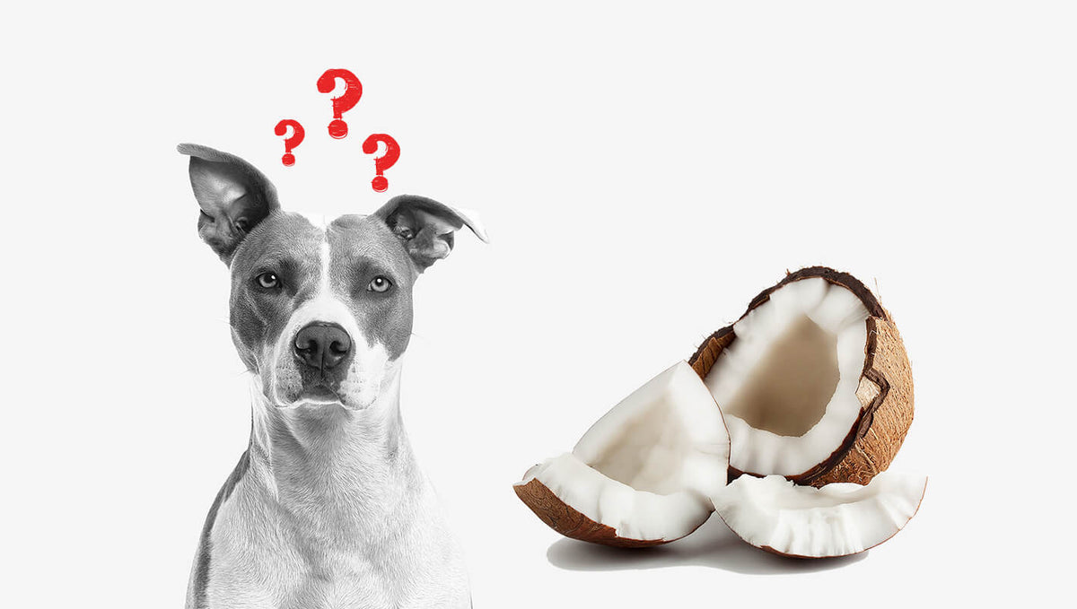 Can Dogs Eat Coconut: A Magic Food for Your Fur Buddy