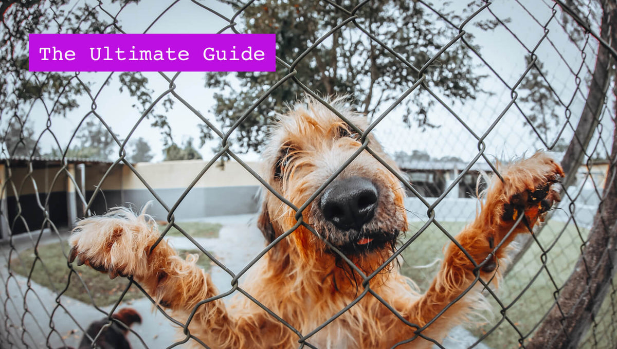 Dog Boarding: The Ultimate Guide