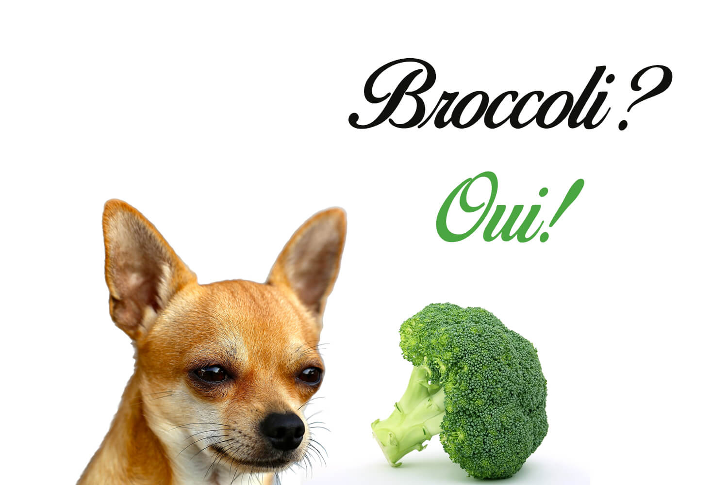 Can Dogs Eat Broccoli? Here's Everything You Need To Know