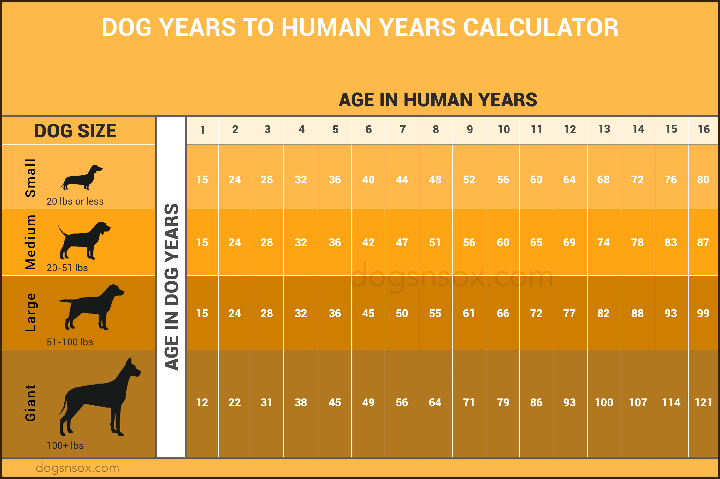 Dogs to human years infographics