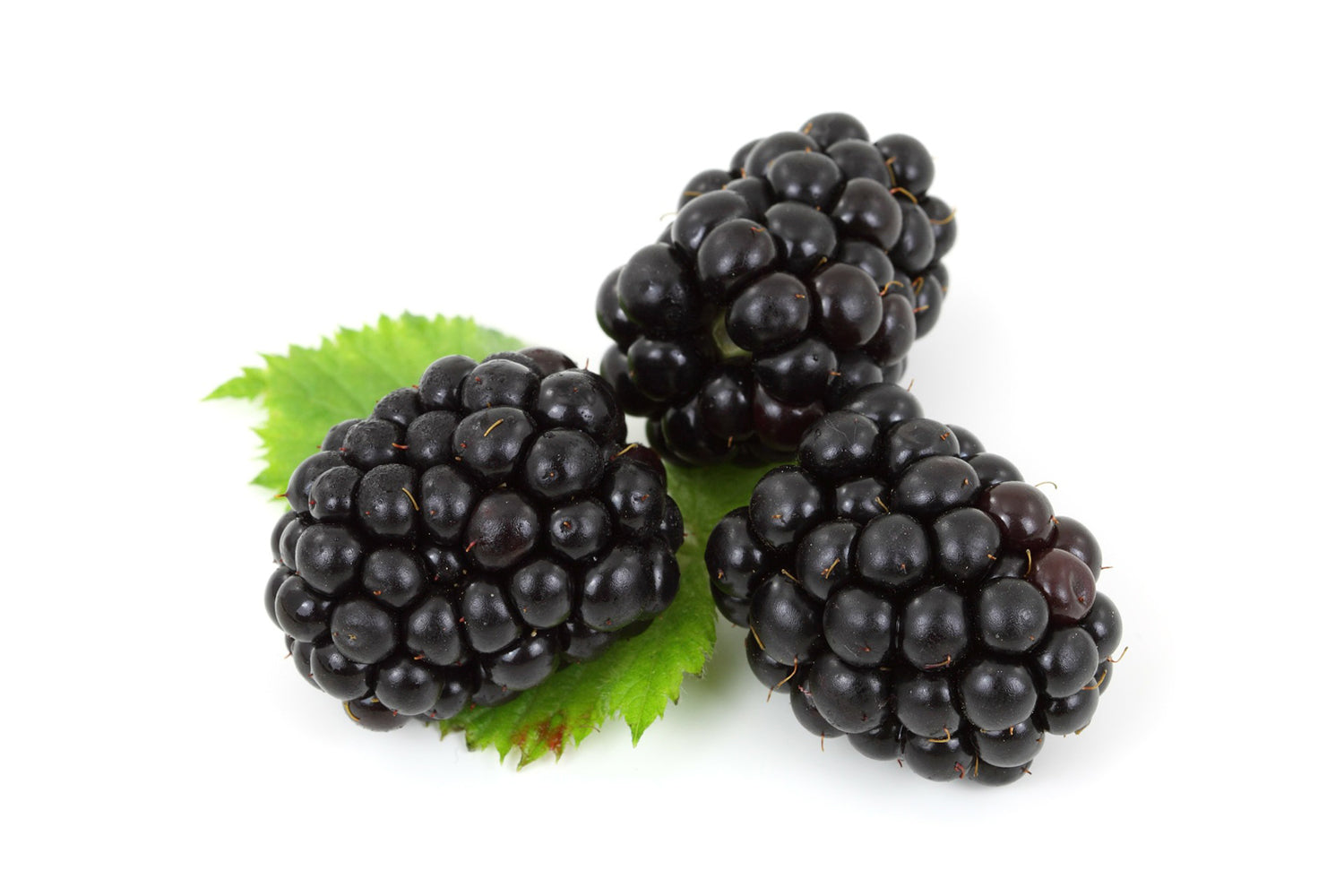 Blackberries for dogs