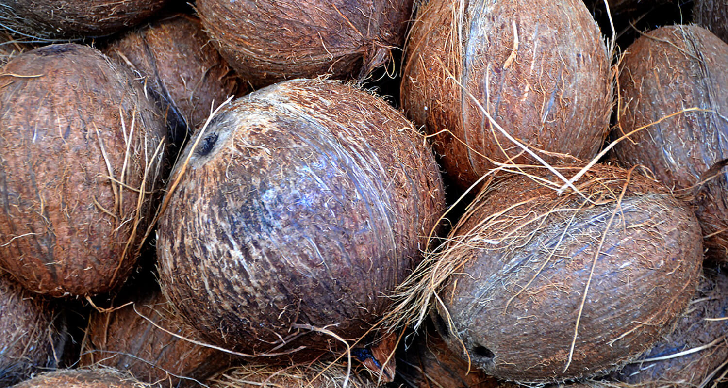 Coconut is great energy source for your dog
