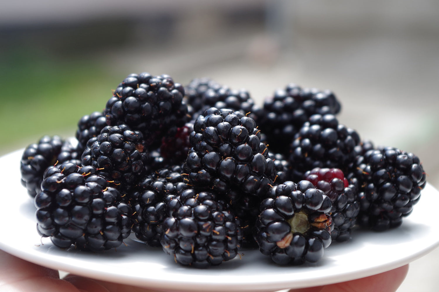 Nutritional Value of Blackberries