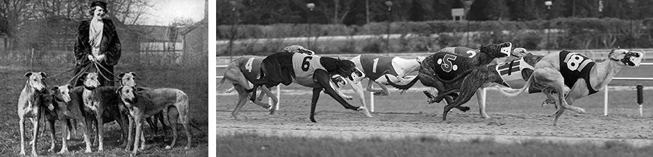 Greyhound racing in the early part of the century
