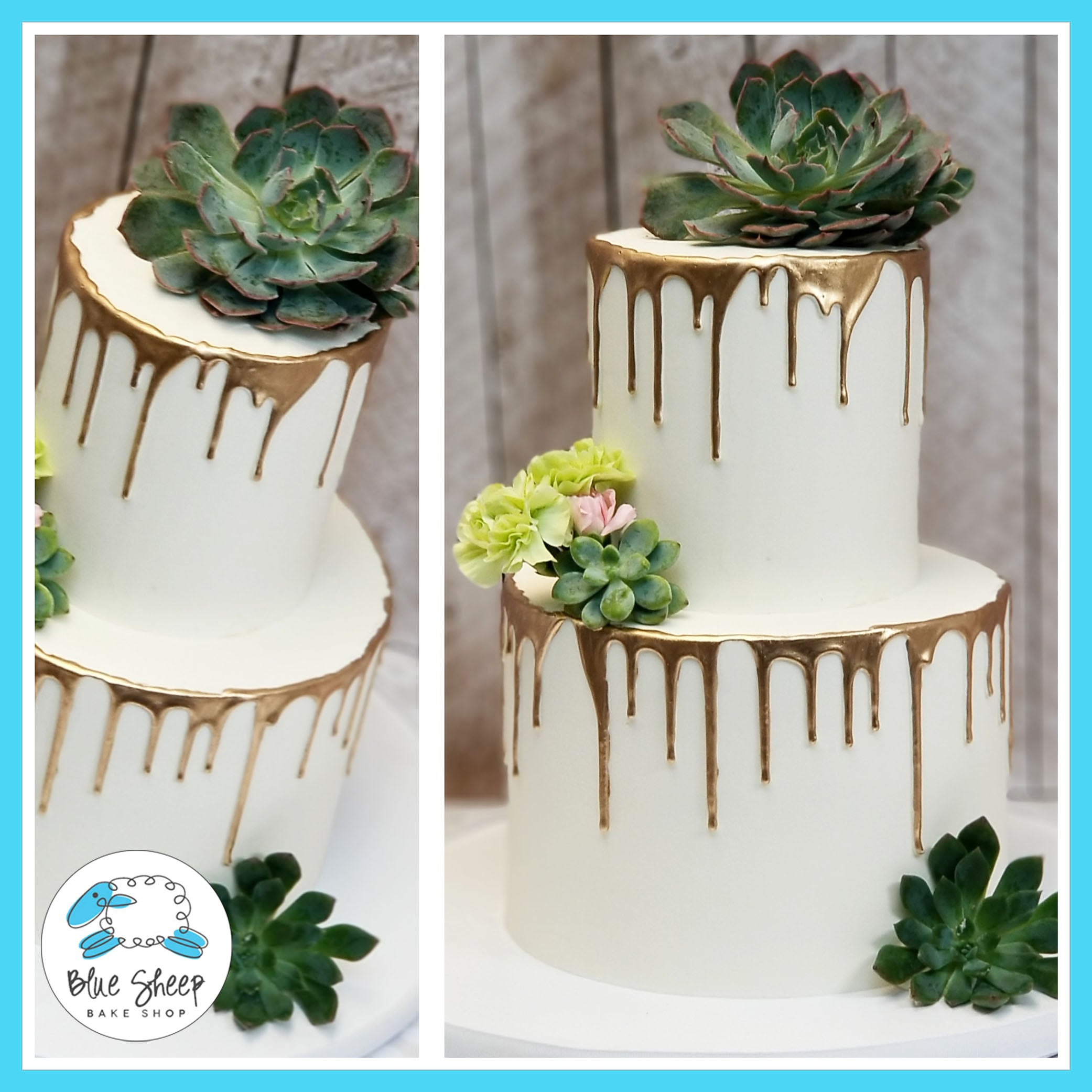 Gold Drip Wedding Cake With Succulents Nj Blue Sheep Bake Shop