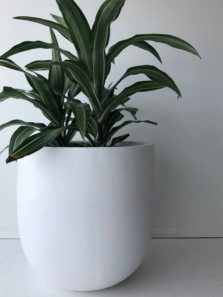essential large pot