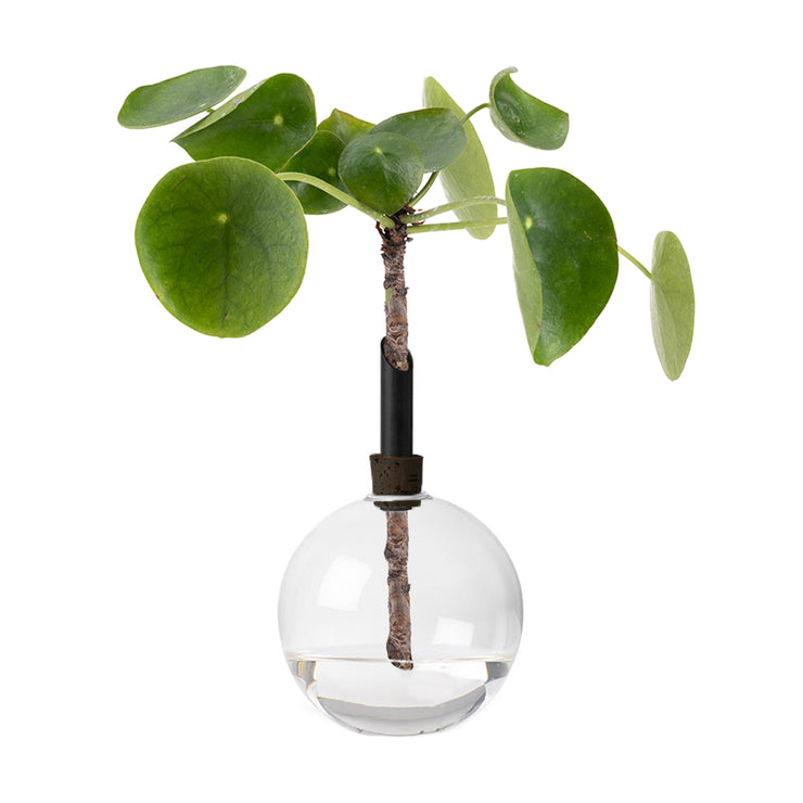 Scandinavia, Form, Glasilium, Vase, Glass, Design, Swedish, Interior, Garden, Plants, Styling, Natures raw form, Transparent