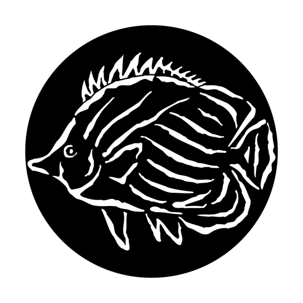 Apollo Sea Tropical Fish Gobo