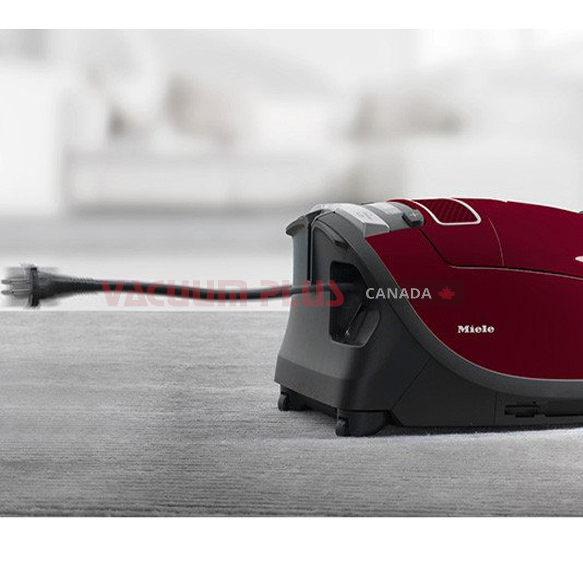 Buy Miele C3 Cat And Dog Canister Vacuum Vacuum Plus Canada