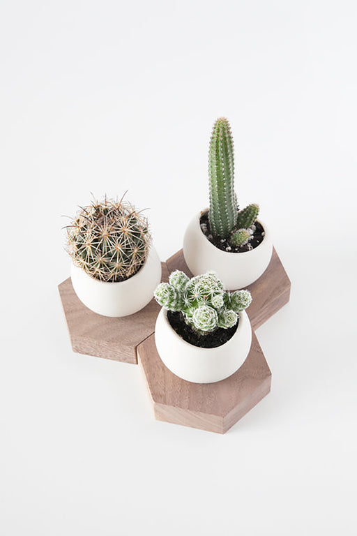 Hex Spora Planter (2 Types)