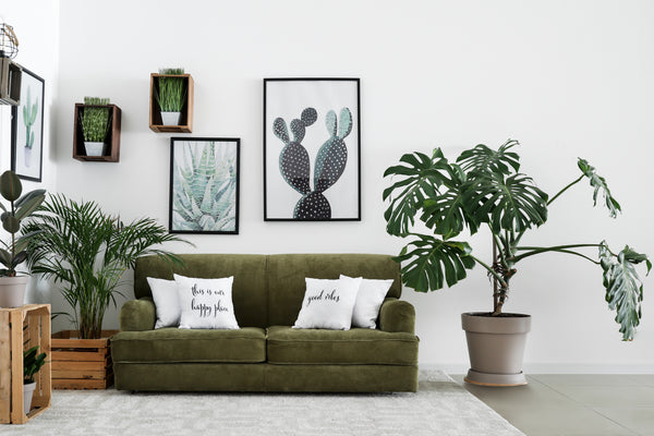 Monstera Plant Care