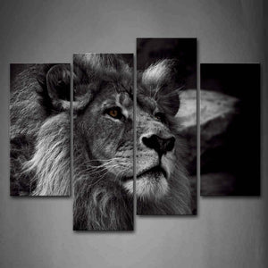 black and white lion's gaze canvas wall art