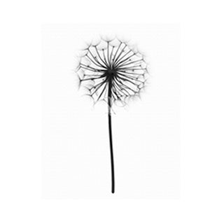 dandelion flower canvas wall art