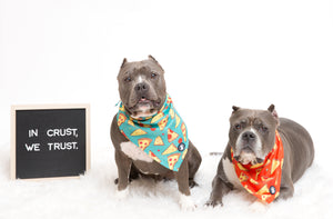Two gray Pit bulls wearing teal and red pizza bandanas I Pittie Clothing Co.