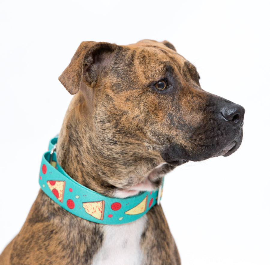 Teal 'Stealin' a Pizza Your Heart' Collar