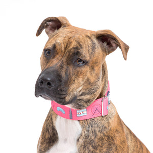 Hot Pink 'Chicago Lovers' Collar