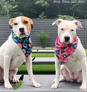 Two white Pit bulls wearing pink and navy donut bandanas I Pittie Clothing Co.