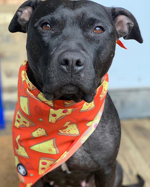 Black Pit bull wearing a Red Pizza Bandana I Pittie Clothing Co.