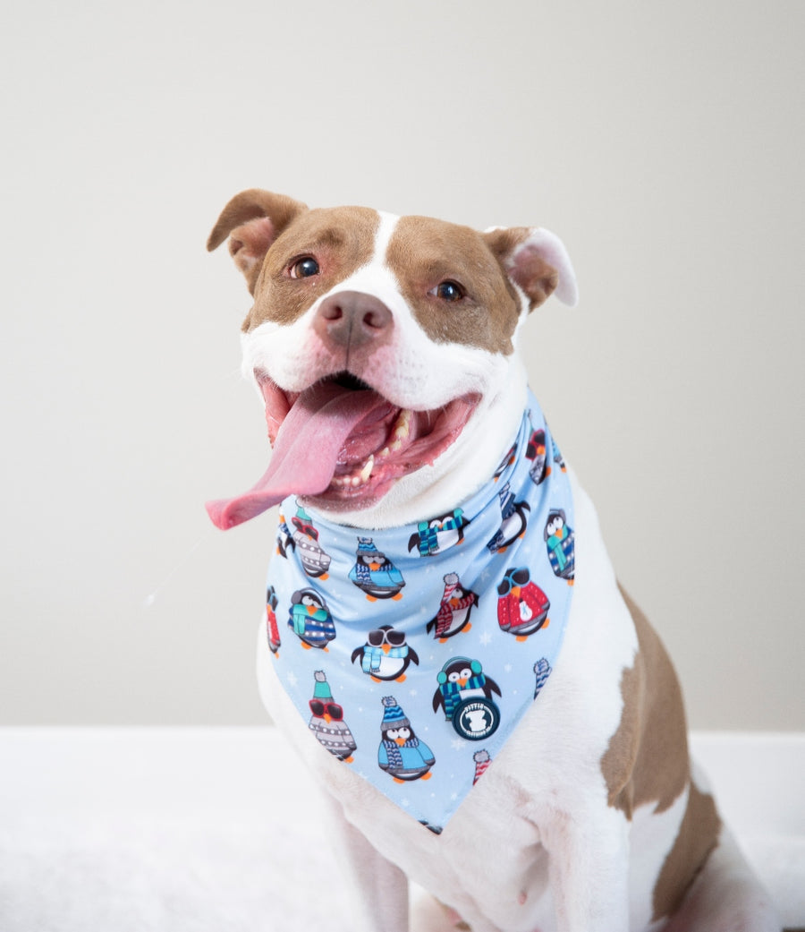 'Stay Cool' Pingüino Bandana