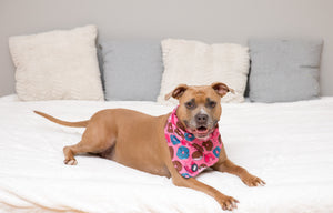 Brown Pit bull with Pink Donut Bandana I Pittie Clothing Co.