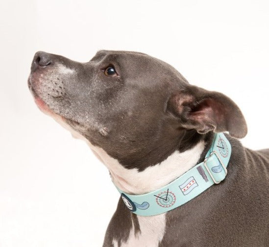 Light Blue 'Chicago Lovers' Collar