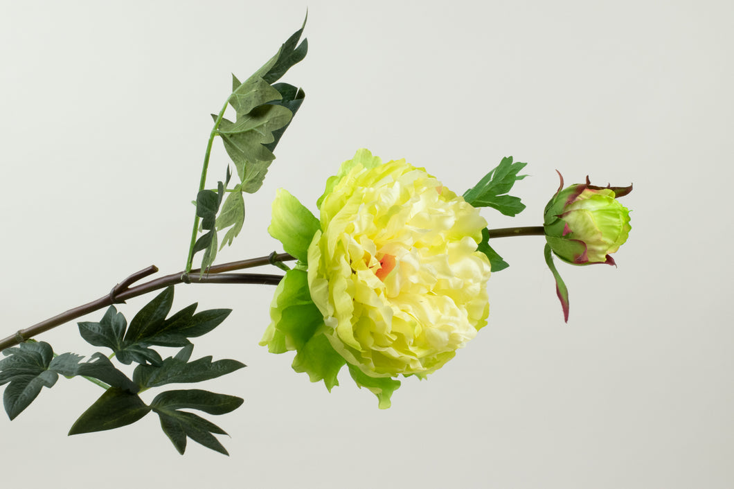 Peony Big Light Green