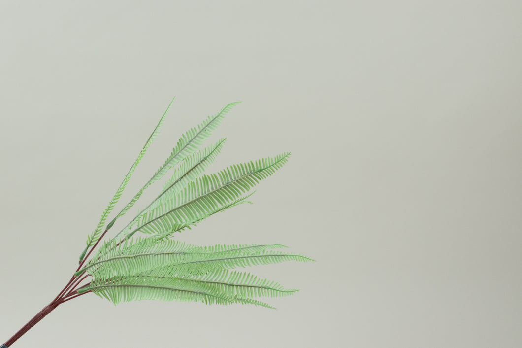 Nephrolepsis Light Green