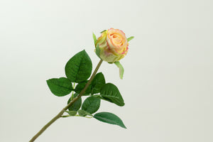 Rose Stem Green