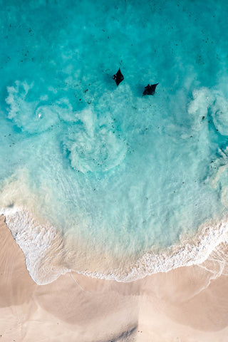 Two Manta Rays in clear shallow water