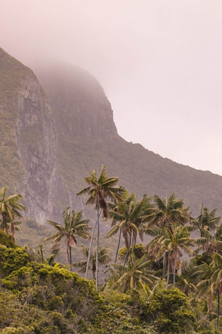 Palm trees in front a foggy Mt Gower in Lord Howe Island