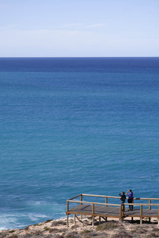 Whale watching at the head of the bight in South Australia
