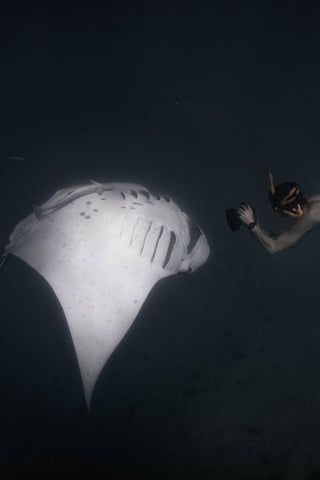 Rolling manta ray exposes belly to me when snorkelling