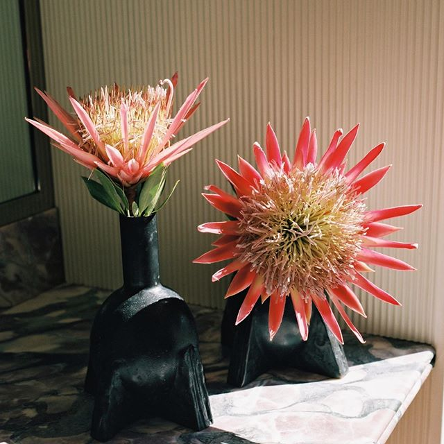 Queen Protea Flower Bundle