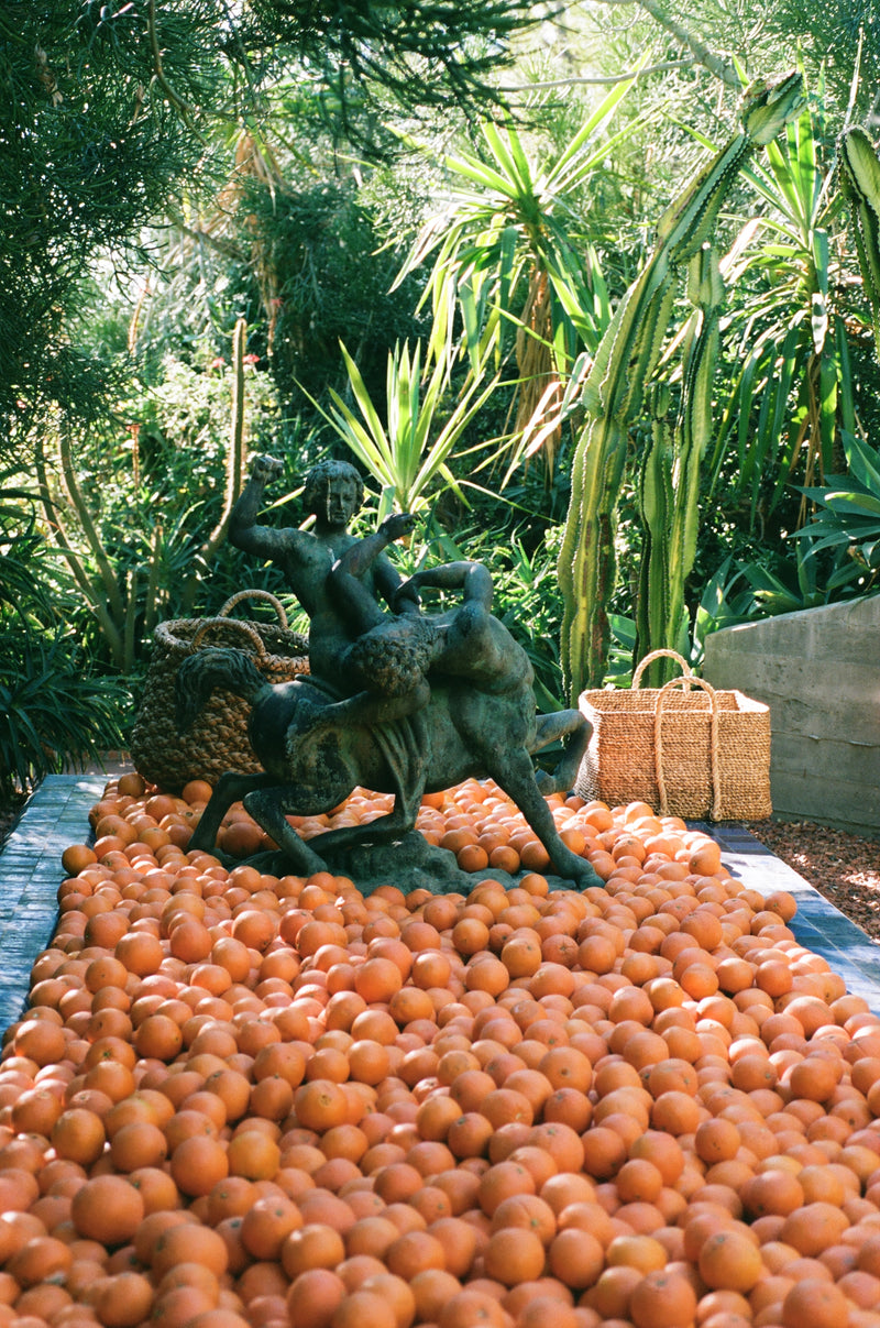 Organic Cara Cara Oranges - Flamingo Estate