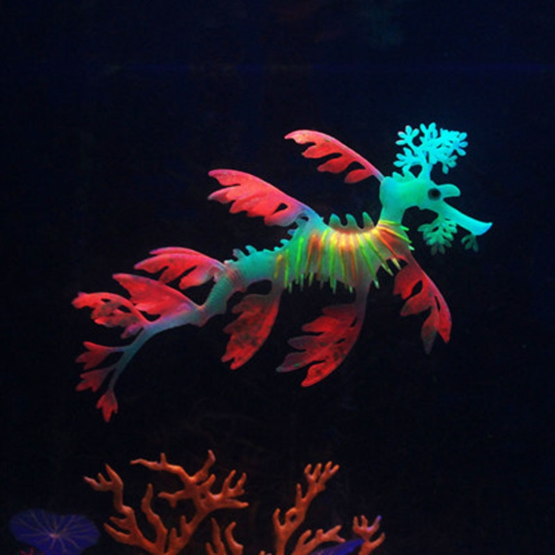 Aquarium Sea Dragon 01
