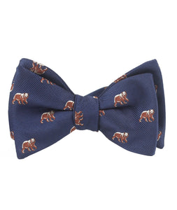 The Bruin Bow Tie - Adult Size - Pre-Tied